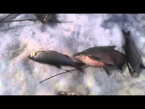 рыбалка на сабундах