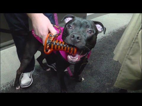 Local company creates high-tech dog toy