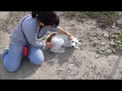 Animalinneed: Video of Breton Lola