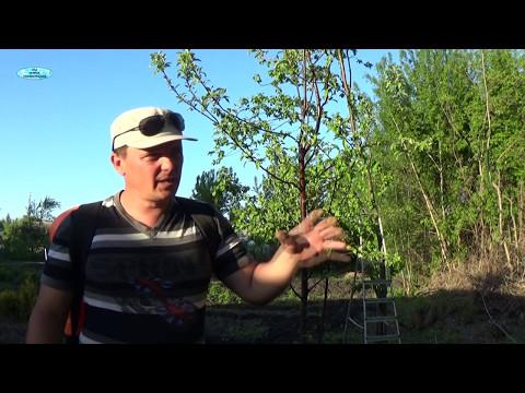 Профилактика появления вредителей в саду ранней весной – опрыскивания и обработки