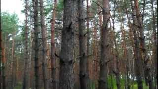 Коп в лесу на старом месте 22.06.2014 Search with a metal detector in the forest at the old place.