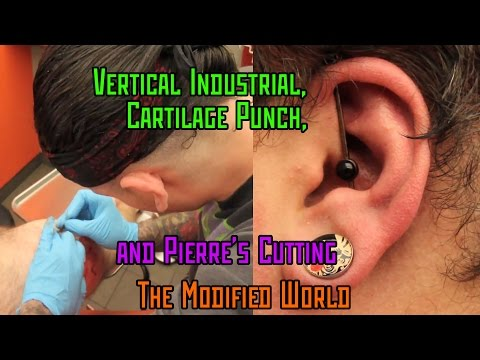 Vertical Industrial Piercing, Cartilage Punch Piercing, and Pierre's Cutting- THE MODIFIED WORLD