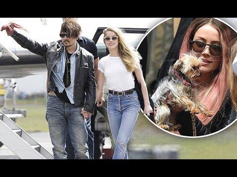 Johnny Depp –Amber Heard will not be JAILED | Hollywood High