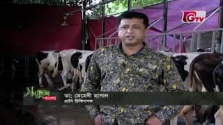 সবুজ বাংলা । Sobuj Bangla | হাজী মোহাম্মদ নাসিরের গাভীর খামার
