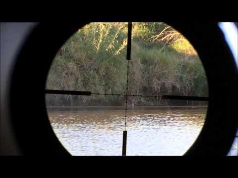Airgun hunting nutrias and pigeons in Uruguay
