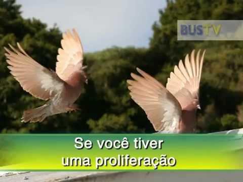 Doenças transmitidas pelos Pombos