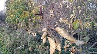 Free Shrimp Food - Freshwater Aquarium Shrimp Leaf Collection Reminder