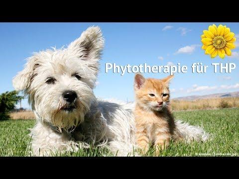 Phytotherapie für THP - Heilpraktikerschule Isolde Richter