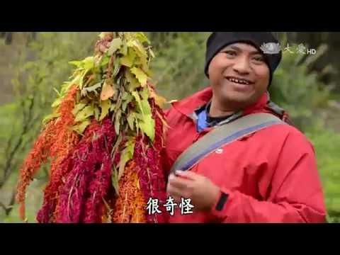 台綜-農夫與他的田-20160523 土坂的紅藜