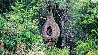 Amazing House Animal Nests Flower Grass   Primitive technology , Building Skill