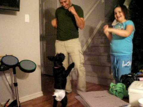 DIAPERED DANCIN DOG Video