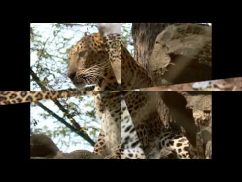 India leopard on loose causes panic in Meerut town - 24 February 2014