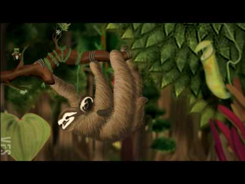 Our Choice: Deforestation - Vancouver Film School (VFS)
