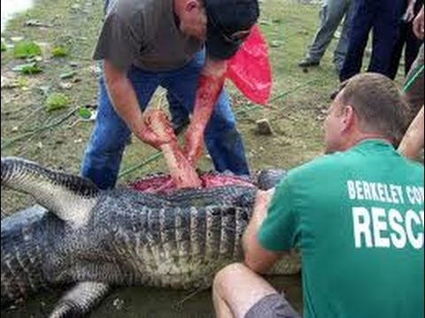 Crocodile eating man alive - photo#25