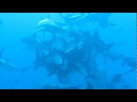Sharks feeding, Osprey Reef,Coral Sea, Australia. Liveaboard Spoilsport April 2012, Mike Ball Expeditions, Cairns, Australia Other: Manta Ray http://goo.gl/SFL3B