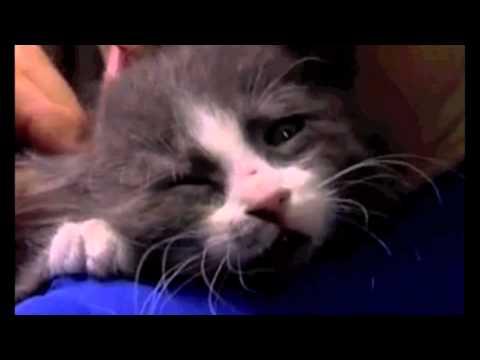 Sarah McLachlan Angel Animal Cruelty Video  ***ORIGINAL VERSION...