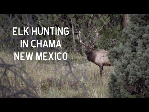 Elk Hunting in Chama, New Mexico | Quinlan Ranch 2016