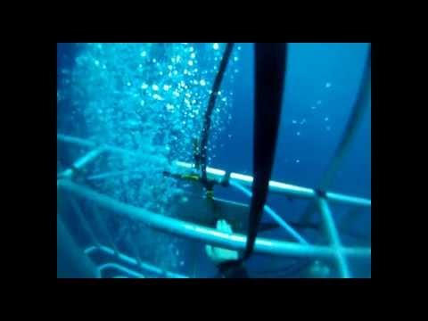 What is it like Cage Diving with Great White Sharks?