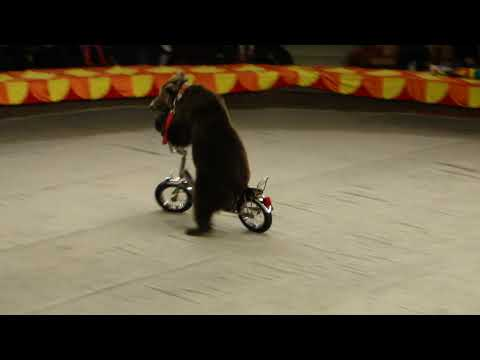 Bears on a bicycle went. Bears went on a bike. Ехали медведи на велосипеде.
