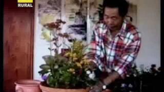 Flores de corte y plantas ornamentales