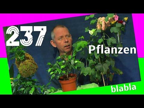 Die Sämlinge und wie geht es weiter mit den Exoten und anderen Pflanzen Teil 237