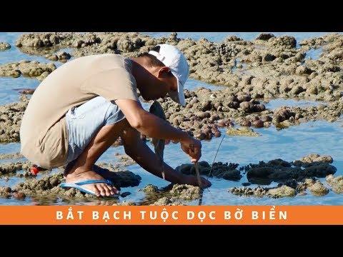 Cách bắt bạch tuộc dọc bờ biển bá đạo không tưởng...
