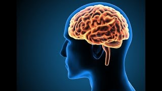 आपके दिमाग के सबसे बड़े राज़   Enigmatic Facts About the Human Brain and Consciousness