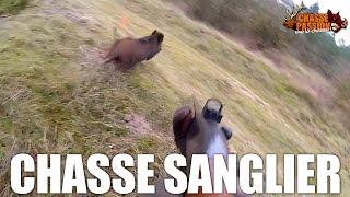 Battue Aux Sangliers - Beaucoup D'action !!!