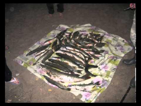 болхуны рыбалка без границ