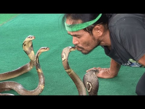 веке такое ферма змей в паттайе белье