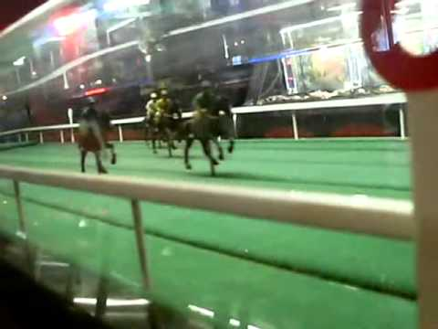 horses slot machines for free