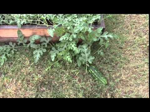 How To Remove A Raised Bed