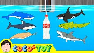 [EN] Sharks live under the wash basin 5, kids animals animation, dinosaurs adventureㅣCoCosToy