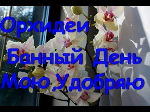 Орхидеи Банный День. Удобряю,купаю.