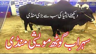 Sohrab Goth Mandi 2016 | Karachi Cow Mandi Latest | Eid Qurban
