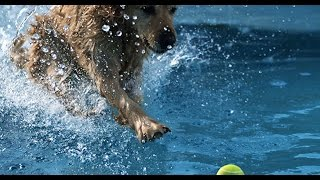 GoPro: Jumping into water with dogs - Earth Unplugged