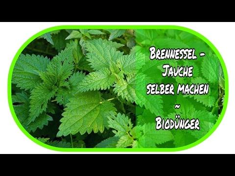 ★ Brennesseljauche selber machen ★// Bio Dünger // Öko // Garten // DIY