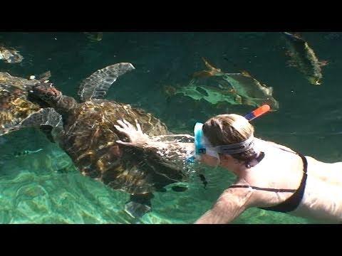 Teknősök - Swimming with turtles, Zanzibar