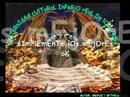 FRAT. CULT. IMPERIO REAL DE LOS ANDES