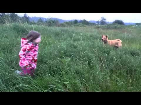 Dog And Girl Running Wild Together In The Grass. video