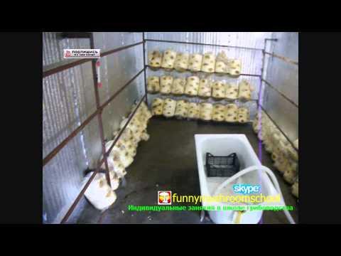 Вентиляция при выращивании вешенки 34