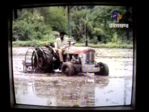 production of basmati rice by Dr. Ritesh Sharma.mp4