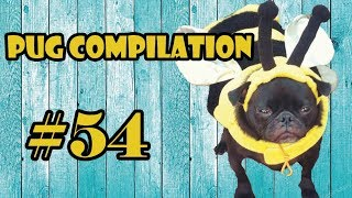 54Pug Compilation 54 - Funny Dogs but only Pug Videos | Instapugs