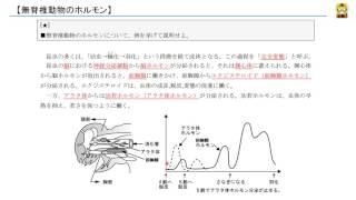無脊椎動物のホルモン