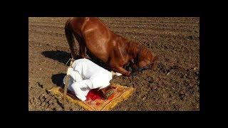 Sahibi İle Namaz Kılan At..Tüyleriniz Diken Diken Olacak..