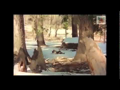 Dekha Ek Khwaab remix by DJ NeDo