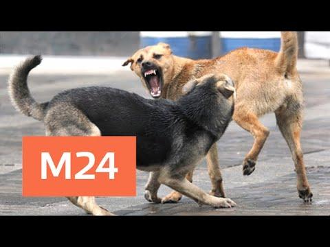 Стали известны подробности нападения бродячих псов на человека в Подмосковье - Москва 24