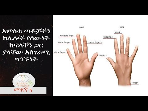 Ethiopia: How are the Fingers Connected with the Organs - EthiopikaLink