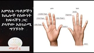 How are the Fingers Connected with the Organs,EthiopikaLink
