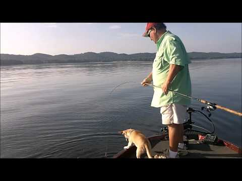Fishing Lake Guntersville . com # 10